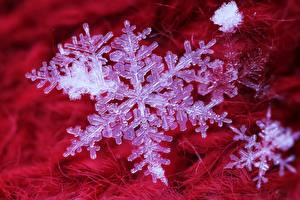 Фотографии Макросъёмка Крупным планом Снежинки