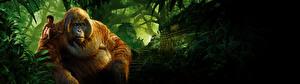 Фото Обезьяны Книга джунглей 2016 Мальчики King Louis, Mowgli, Neel Sethi Кино