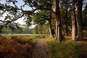 Фотография Нидерланды Дороги Осенние Деревья Трава s-Graveland Природа