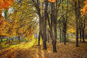 Фотография Парки Осенние Деревья Листва Природа