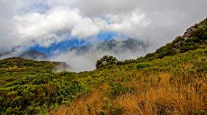 Обои Португалия Осенние Холмы Трава Туман Облака Madeira Природа