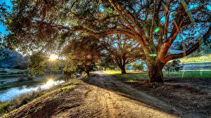 Картинка Дороги Берег HDRI Деревья Лучи света Природа