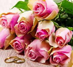 Обои Розы Вблизи Розовые Кольцо цветок
