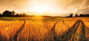 Обои Пейзаж Поля Рассветы и закаты Колос Природа