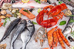 Фото Морепродукты Рыба Омары Креветки