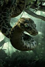 Картинки Змеи Книга джунглей 2016 Kaa