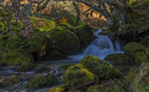Фотографии Испания Водопады Камень Мох Ствол дерева Природа