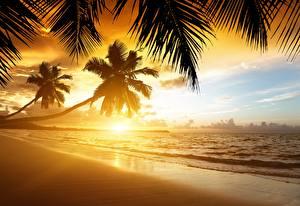 Фотография Рассветы и закаты Море Берег Тропики Пальмы Пляж