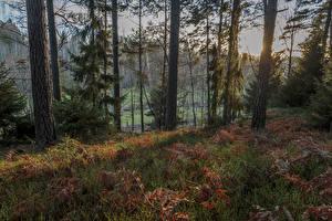 Фотография Швеция Леса Осенние Деревья Ветвь Трава Природа