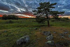 Фотография Швеция Рассветы и закаты Небо Камни Деревья Облака