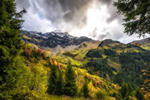 Фото Швейцария Горы Осенние Леса Ель Interlaken-Oberhasli