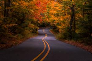 Картинки США Дороги Леса Осень Michigan Природа