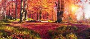 Фотографии Украина Осень Леса Закарпатье Деревья Листва Лучи света