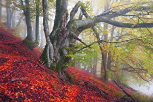 Фотография Украина Осень Закарпатье Деревья Листья Туман
