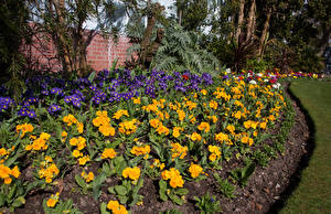 Фотография Великобритания Сады Примула Swansea Botanic Gardens Wales Природа