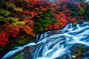 Фотография Водопады Осенние Деревья Мох