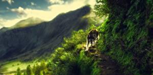 Фотографии Волки Рисованные Тропинка Животные