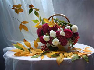 Фото Астры Рябина Натюрморт Корзина Листва Стол Цветы