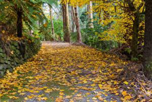Картинка Австралия Парки Осень Листья Alfred Nicholas Memorial Gardens