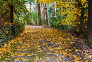 Картинка Австралия Парки Осень Лист Alfred Nicholas Memorial Gardens Природа