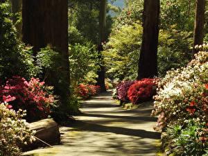 Фотографии Австралия Парки Дерево Кустов George Tindale Memorial Garden Sherbrooke Природа