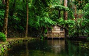Фотографии Австралия Парки Пруд Дома Деревья Alfred Nicholas Memorial Gardens Природа