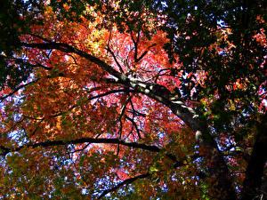 Фотографии Осенние Ветвь Листва Деревья