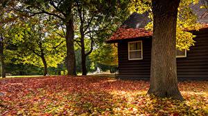 Картинка Осенние Здания Деревья Листва Природа