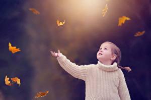 Фотография Осенние Девочки Свитер Листва Ребёнок