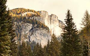 Обои Осень Горы Ель Скала Природа