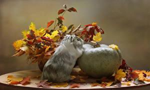 Картинки Осенние Тыква Морские свинки Листва Животные