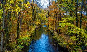 Картинки Осенние Реки Деревья Природа