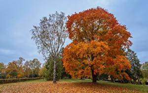 Фотографии Осенние Деревья Листва Природа