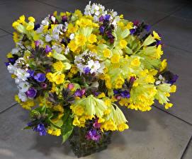 Фотографии Букеты Разноцветные Cardamine pratensis