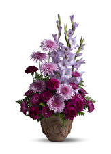 Обои Букеты Хризантемы Гвоздика Гладиолус Белом фоне Вазе цветок