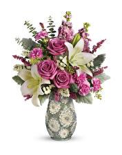 Обои Букеты Розы Лилии Гвоздики Белый фон Ваза