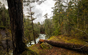 Фотография Канада Парки Леса Реки Ствол дерева Vancouver Island National Parks Природа