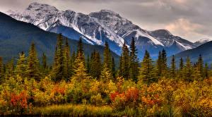 Картинка Канада Парк Горы Леса Осенние Банф Ель Кусты Природа