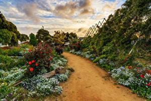 Обои Чили Сады Algarrobo Природа