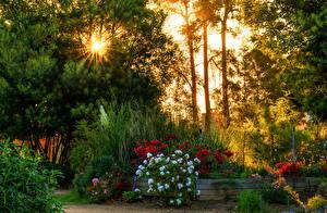 Картинки Чили Сады Лучи света Кусты Деревья Algarrobo