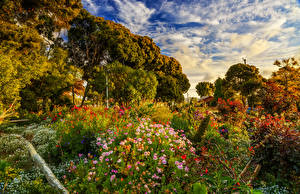 Обои Чили Сады Деревья Кусты gardens Algarrobo Природа