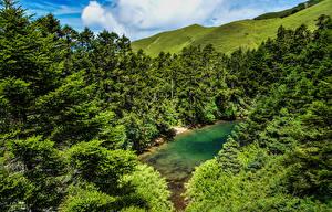 Картинка Китай Тайвань Лес Озеро Ели Природа