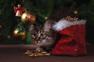 Картинка Рождество Коты Подарки Шарики Животные