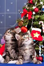 Обои Новый год Коты 2 Котята Шарики Взгляд Животные