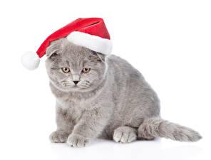 Картинки Новый год Кошка Белом фоне Шапки Серый Котята животное