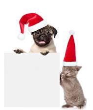 Фотографии Новый год Собаки Кошки Белый фон Шаблон поздравительной открытки Вдвоем Шапки Мопс Котята