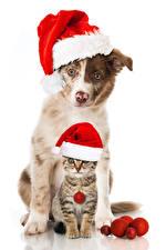 Картинка Новый год Собака Кошки Белом фоне Шапки Котят Двое Животные