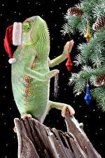 Обои Рождество Праздники Черный фон Новогодняя ёлка Шапки Шишки Хамелеон Животные