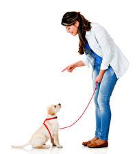 Картинки Собака Белый фон Шатенки Улыбка Джинсы Ретривера Щенок Девушки