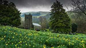 Фотографии Англия Храмы Церковь Нарциссы Ель Troutbeck Природа